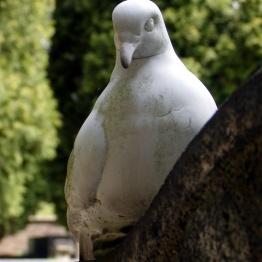 Фото голуби